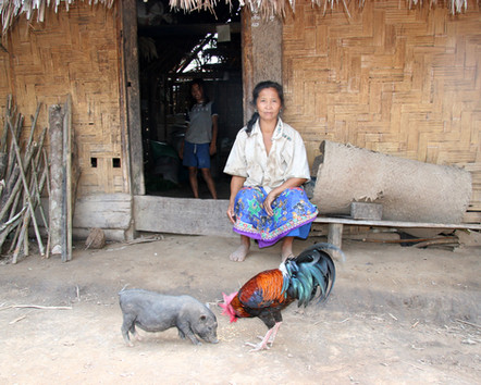 The Pig and the Rooster, Laos