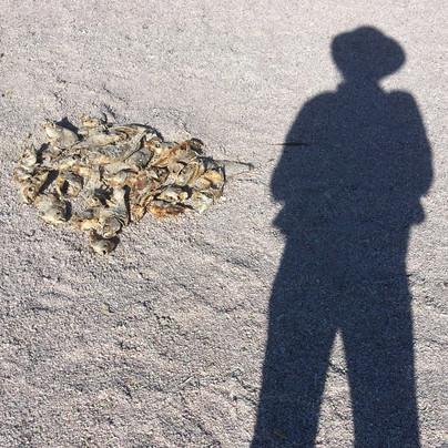 Self Portrait with Dead Fish, Salton Sea, CA