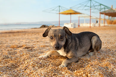 portrait-of-stray-puppy-on-the-beach.jpg