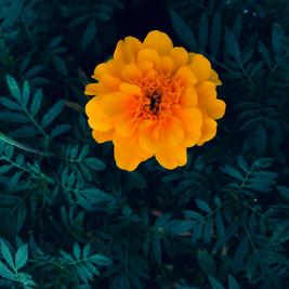 2018.8.7 beijing flower