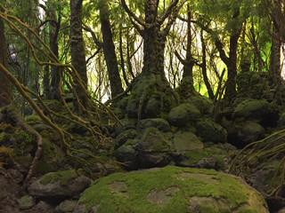 MINIATURE YAKUSHIMA FOREST MODEL