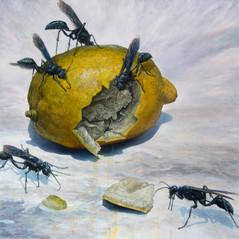 Lemon and Mud Daubers