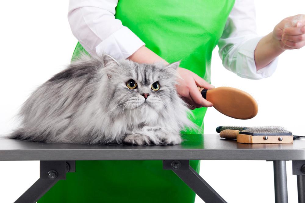 Preparación del gato