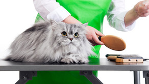 Grooming Your Cat