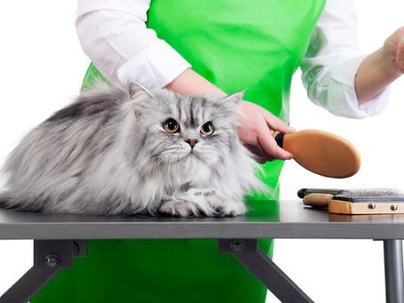 顔が大きい猫は心臓病になりやすい?