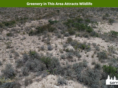 Greenery in This Area Attracts Wildlife.