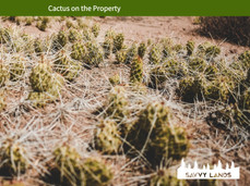 Cactus on the Property.jpeg