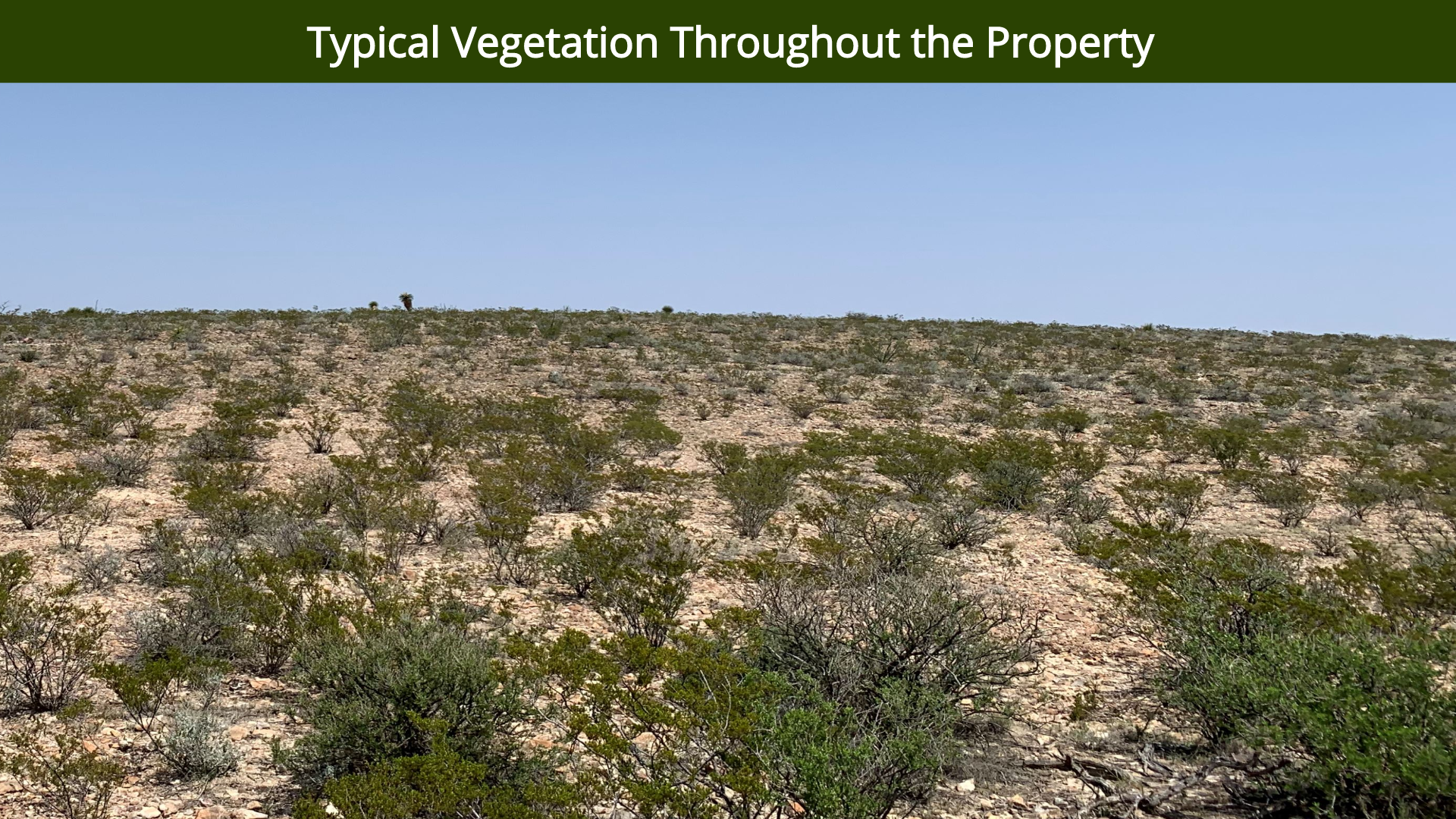 Typical Vegetation Throughout the Proper