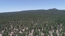 Lots of Forest in This Area.JPG
