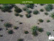 Lots Of Tracks.jpeg