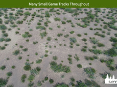 Many Small Game Tracks Throughout.jpeg