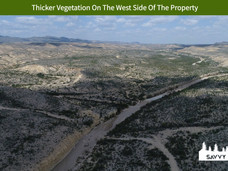 Thicker Vegetation On The West Side Of T
