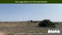 This Large Bush is on the South Border.p