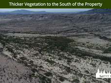 Thicker Vegetation to the South of the P