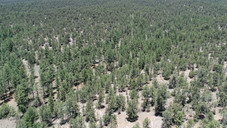 Cibola National Forest North of the Prop