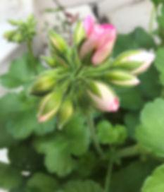 FlowerBud_edited.jpg