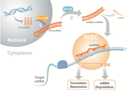 MicroRNA as therapeutics for the treatment of retinal degenerations