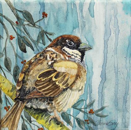 Mr. Sparrow