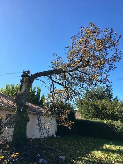 abattage-var-bouches-du-rhone-wood