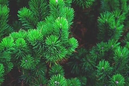 Wood Élagage s'occupe de l'entretien de vos espaces verts dans le Var
