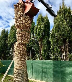 L'élagage et l'abattage de vos arbres dans les Bouches-du-Rhône avec Wood Élagage