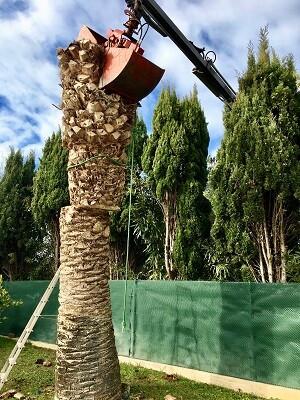 Abattage de troncs d'arbres par Wood Elagage