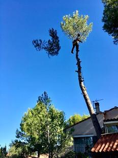 Abattage d'arbres par Wood Elagage