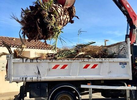 Abattage branches Wood Elagage Bouches-du-Rhône