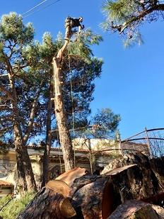 Wood Elagage Marseille 13