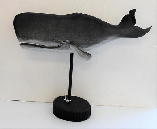 Sperm Whale #13