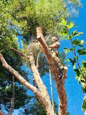 Abattage de branches d'arbres