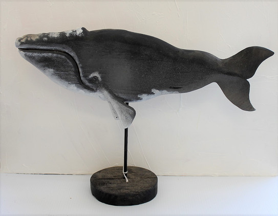 Wright Whale #12