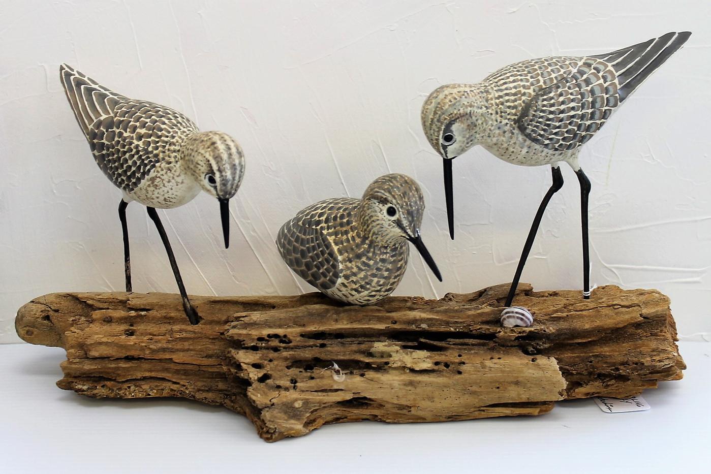 Sanderling Family #4