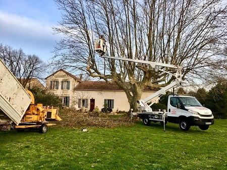 Abattage d'arbres dans jardin