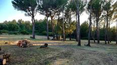 Débroussaillement Marseille Wood Elagage 13