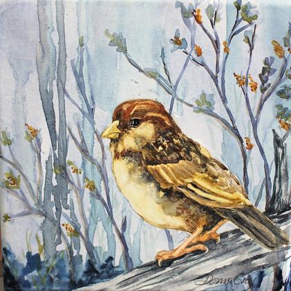 Mrs. Sparrow