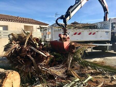 Abattage arbres et branches par Wood Elagage