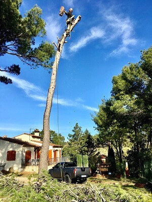 Abattage élagage par Wood Elagage