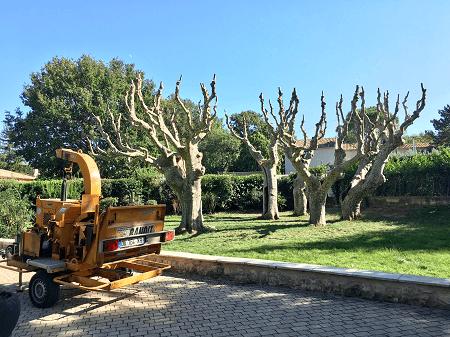 Abattage wood elagage à Marseille