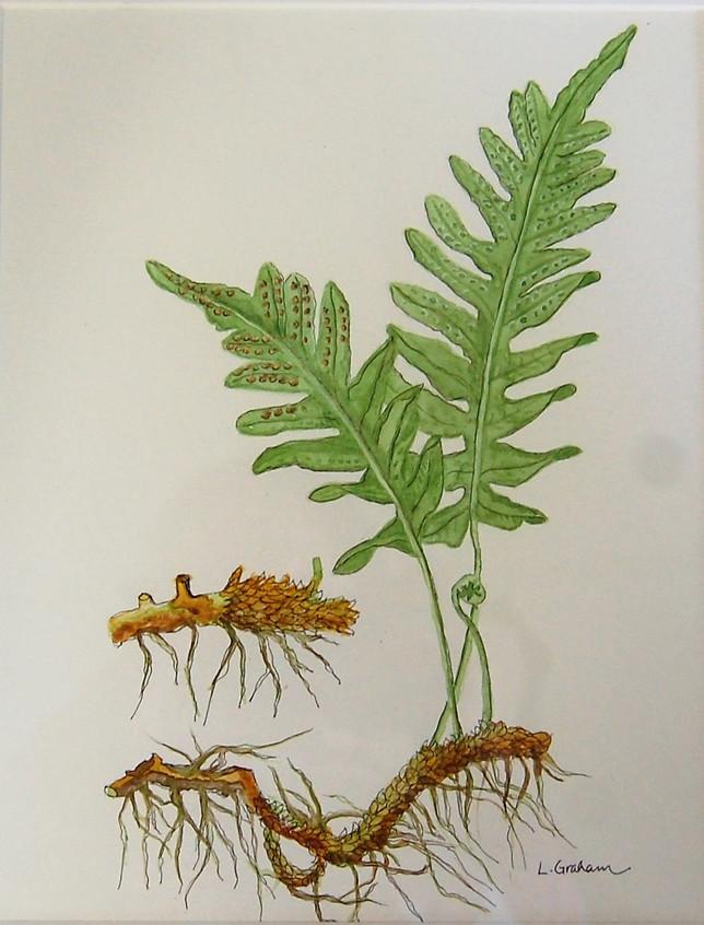 Botanical Fern by Laura Graham