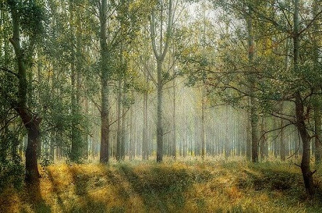 Wood Élagage : Des arbres en pleine santé grâce à l'élagage