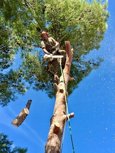 Abattage d'arbres Wood Elagage