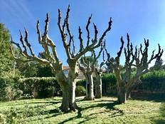 Abattage arbres et branches