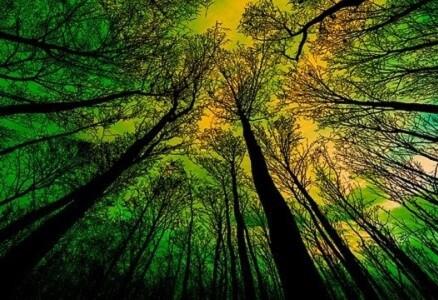 Wood Elagage dans les Bouches-du-Rhône | Abattage - Émondage | Rognage de souches | Broyage de branches | Taille | Débroussaillement |
