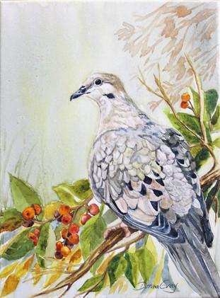 Soft Dove Morning