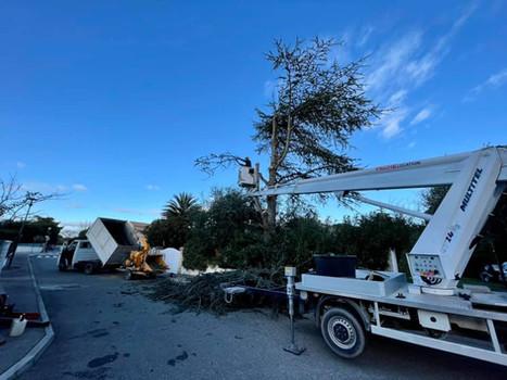 fos-sur-mer-abattage-broyage-evacuation