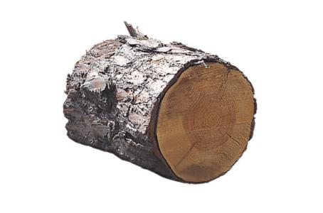 Wood élagage : Vente de bois