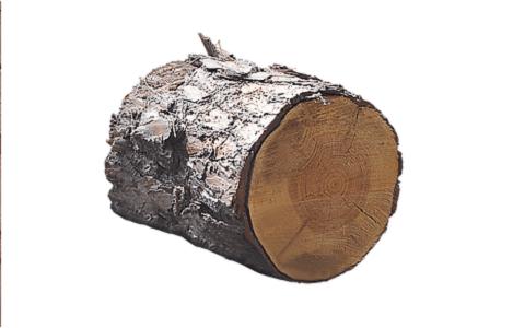Wood élagage : vente de bois | Wood Élagage |