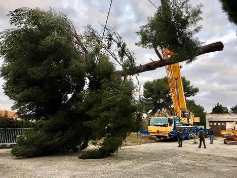 Wood elagage abattages d'arbres
