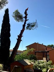 Wood Elagage - Abattage d'arbres - Marseille